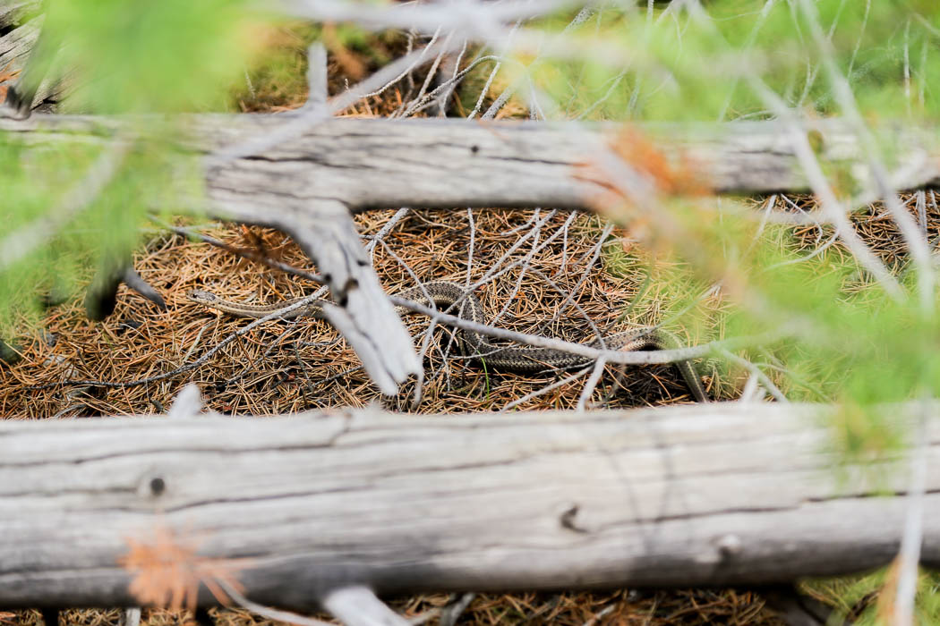 yellowstone1-aug2015-17