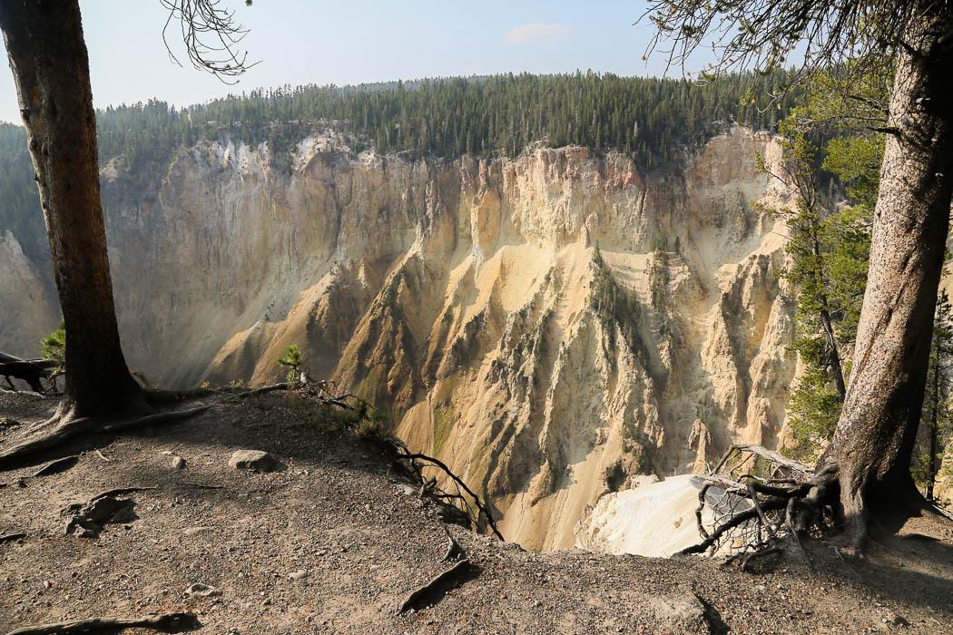 Yellowstones egen Grand Canyon, i östra delen av parken. Träden är på väg att ge vika i den porösa marken.