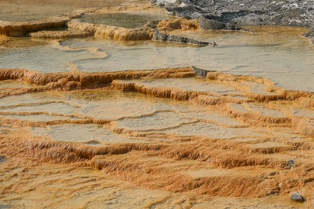 Mammoth Hot Springs, där vulkaniskt varmvatten tränger upp i jorden och vars avlagringar lämnar de här fantastiska formationerna.