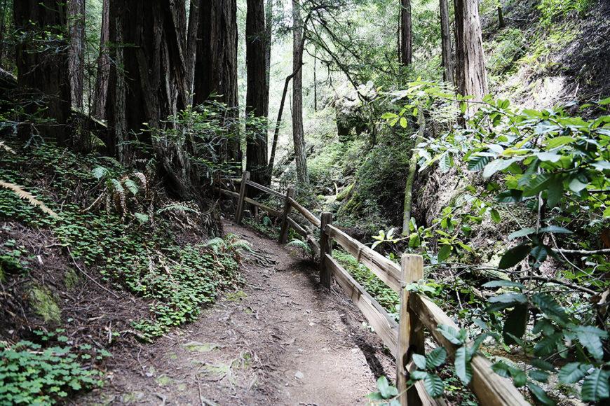 redwood-8