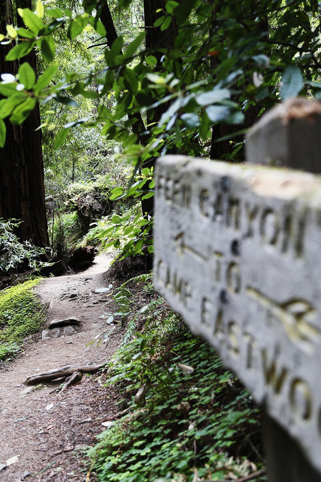 redwood-9