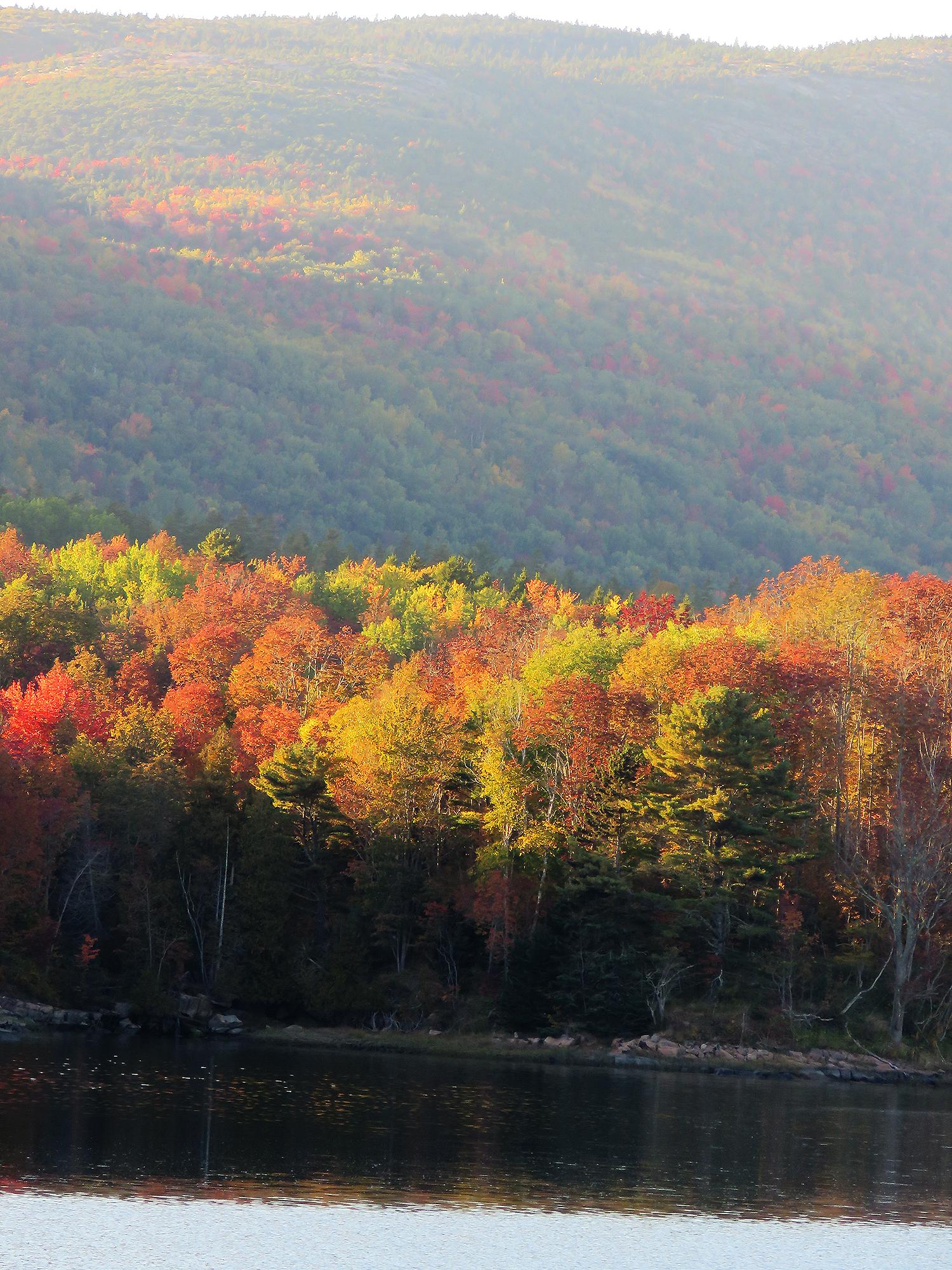 Lövskog i nationalparken Acadia, Maine. Foto: Erik Bergin