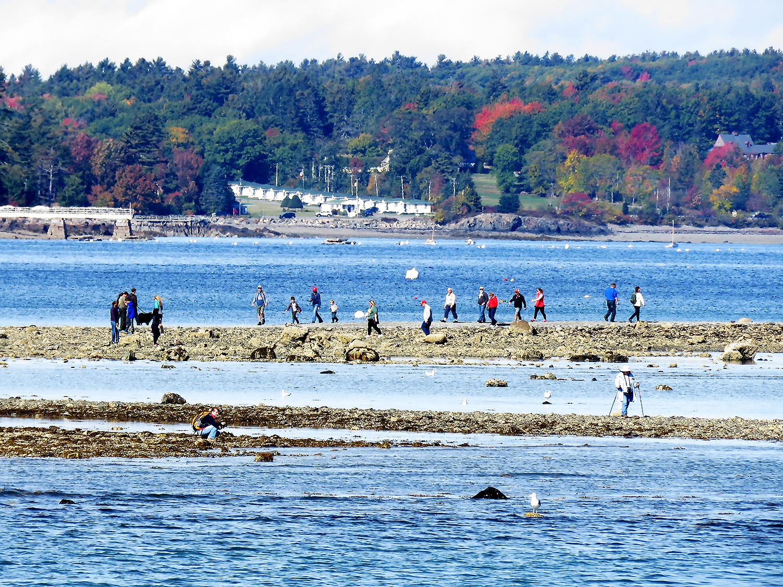 Folk ute på promenad vid lågvatten utanför Bar Harbor. Foto: Erik Bergin