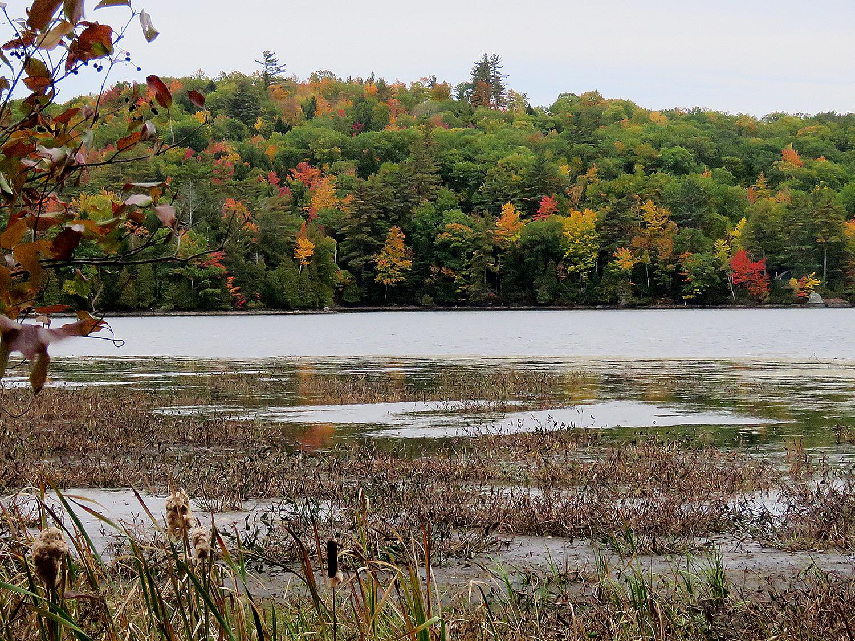 Lövskog i Maine i oktober. Foto: Erik Bergin