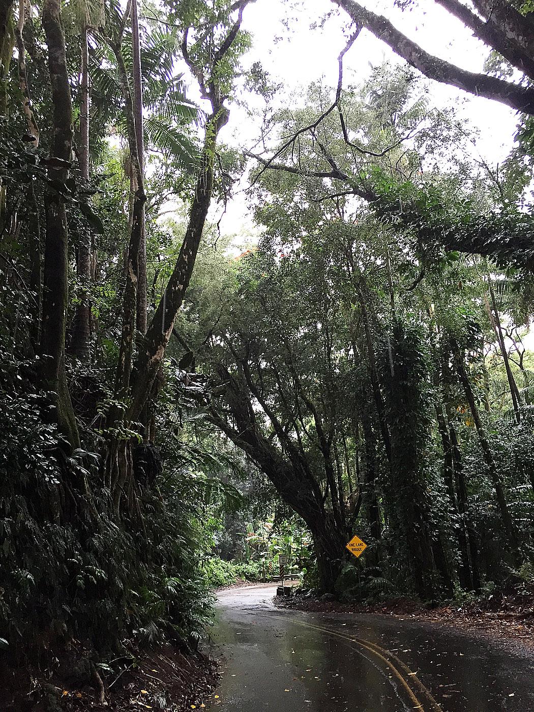 "En lummig landsväg, en sk ""scenic route"", strax norr om Hilo."