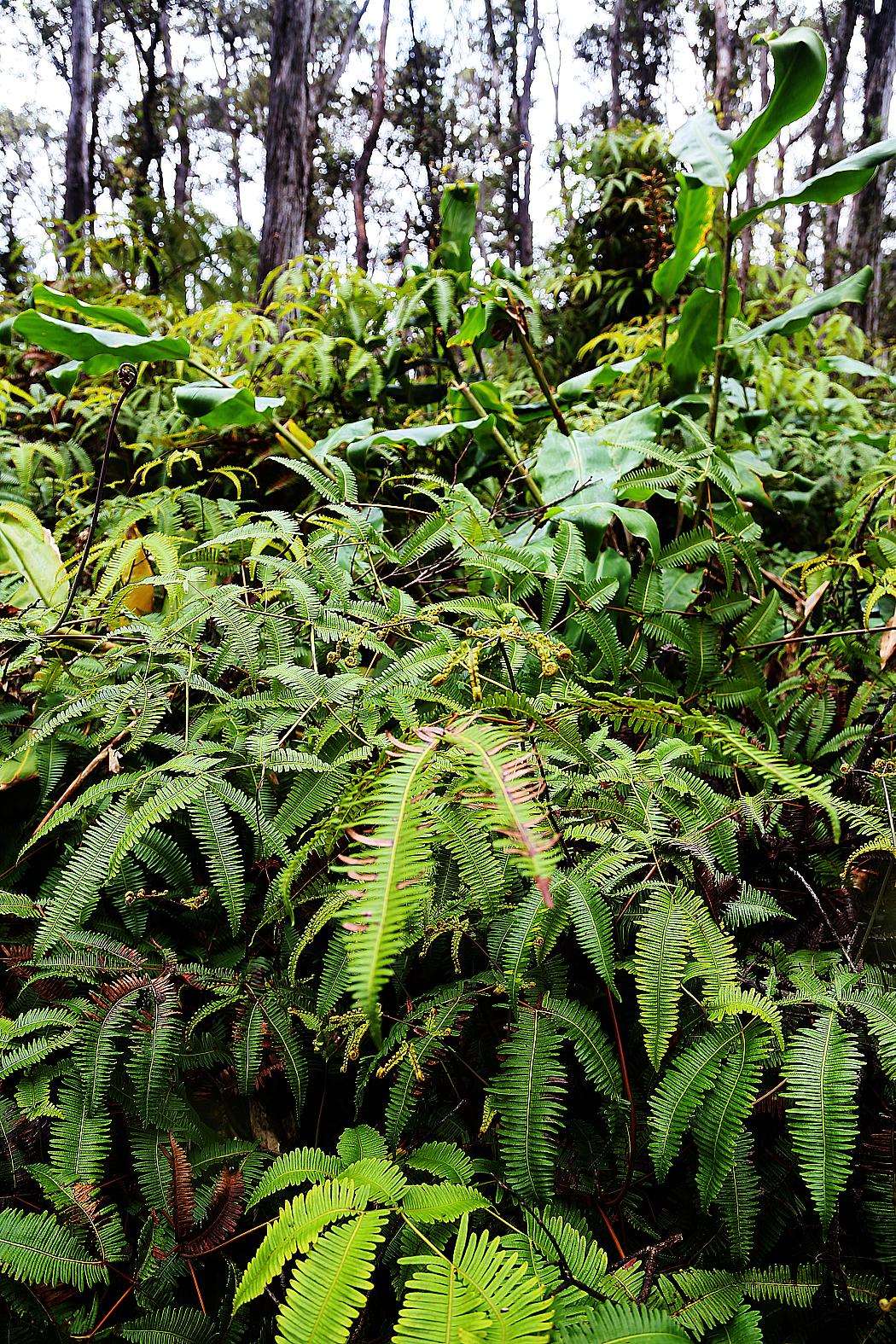 Tät djungel omger kratern.
