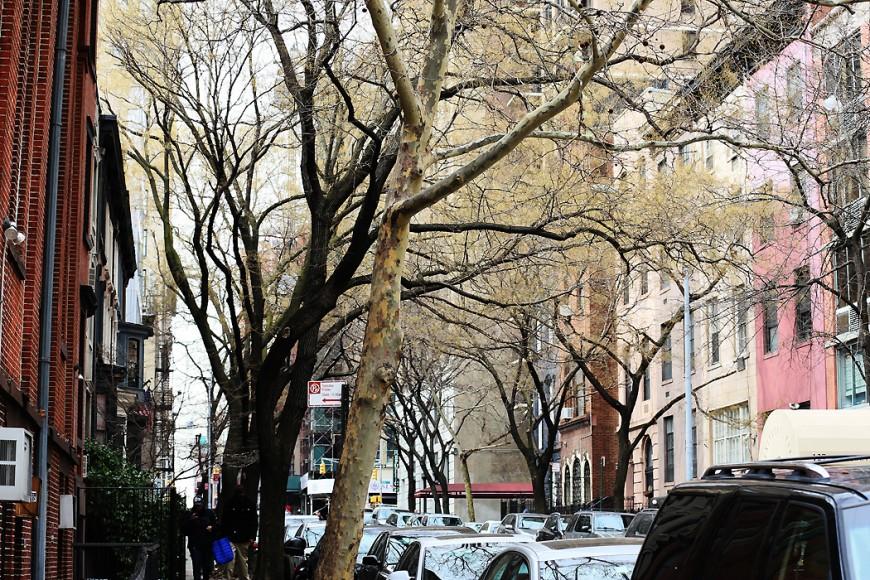 Ett av få vårtecken på Manhattan: något som liknar gröna knoppar på ett träd vid 30:e gatan/Lexington.