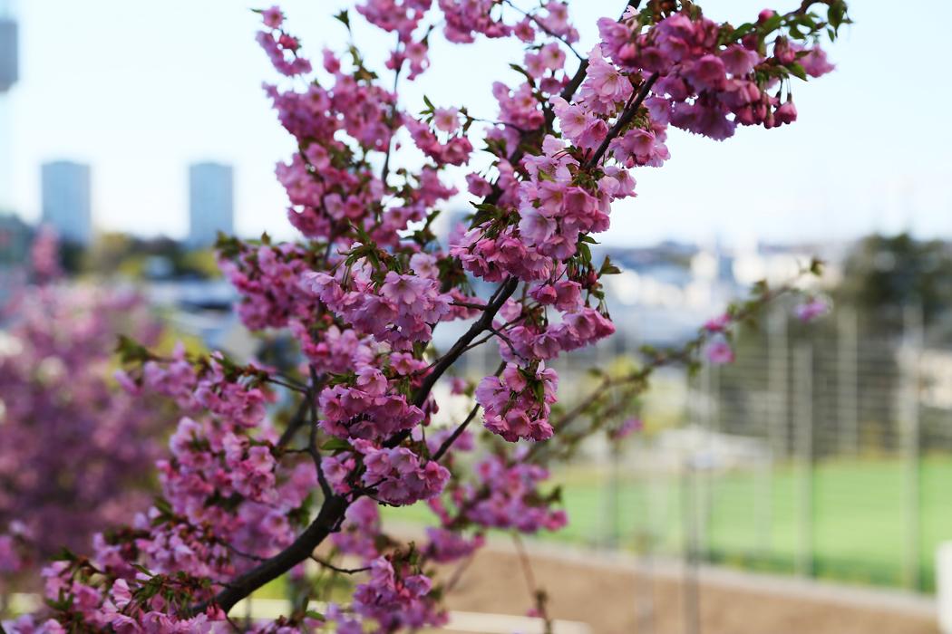 Våren står i blom.