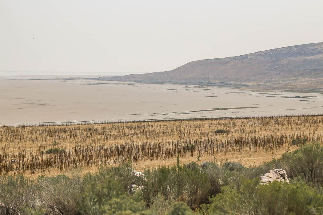 Antelope Islands kust faller ned i saltsjön.