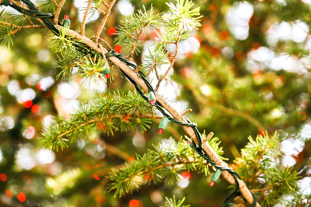 En hel gran, eller vad sorts barrträd det nu är, har pyntats med röda små lampor.