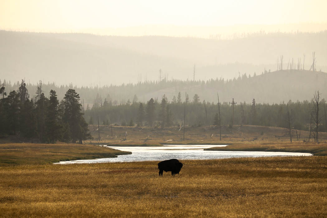 yellowstone1-aug2015-26