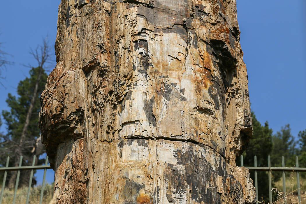 Ser ut som trä, men är sten.