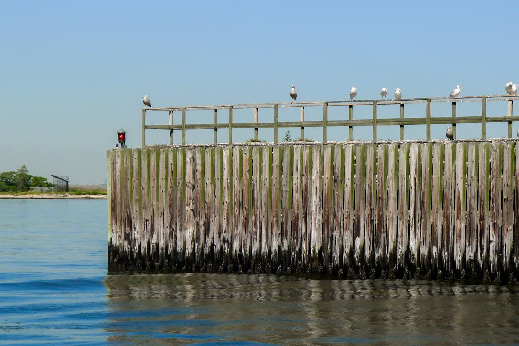 Sjöfågel väntar på bättre tider.