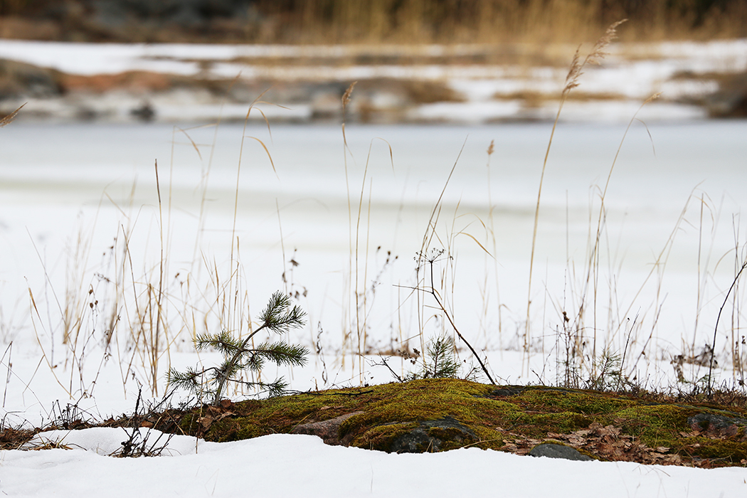Frusen Roslag. Foto: Erik Bergin