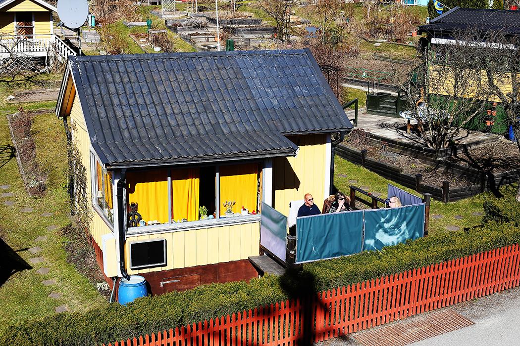 Mys på uteplatsen på en kollonilott vid Tanto den 28 mars. Foto: Erik Bergin