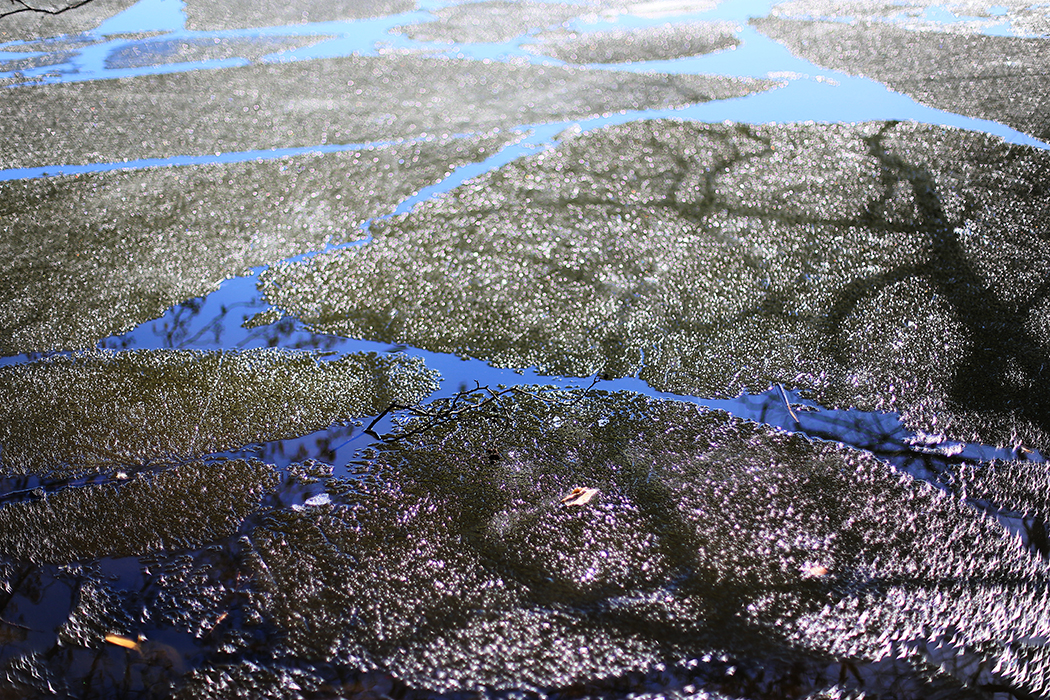 Rutten is i Årstaviken. Foto: Erik Bergin